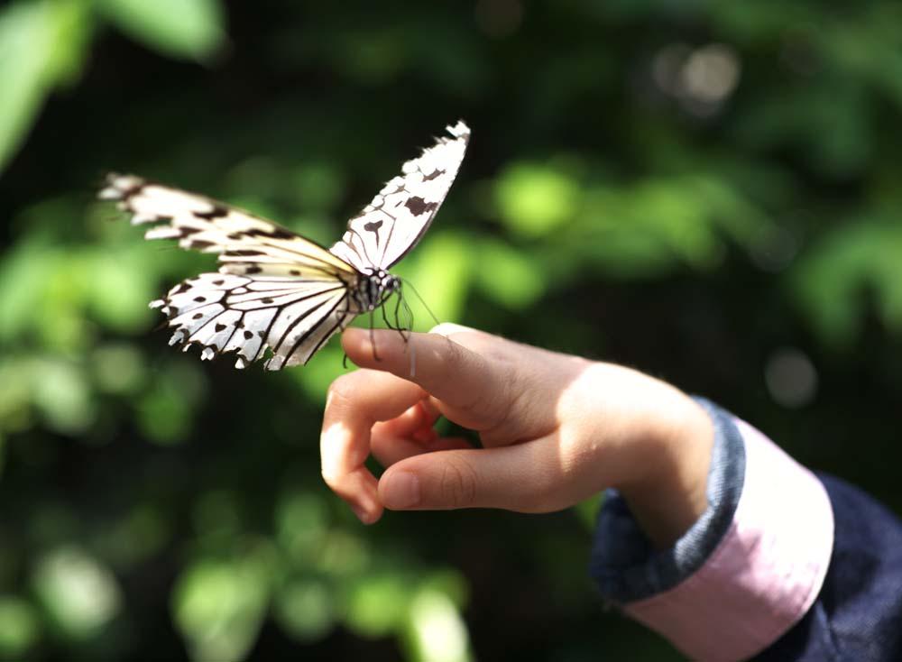 ni_a_y_mariposa